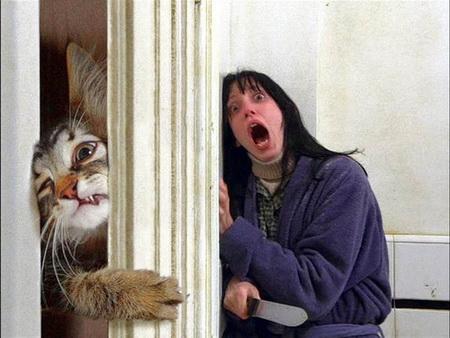 Cat-shining